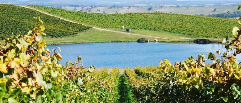 tumbarumba winery vines